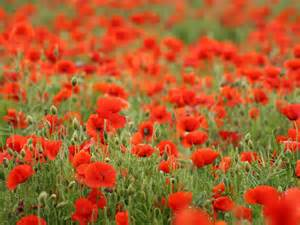 Lest We Forget……